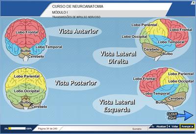 Curso Neuroanatomia