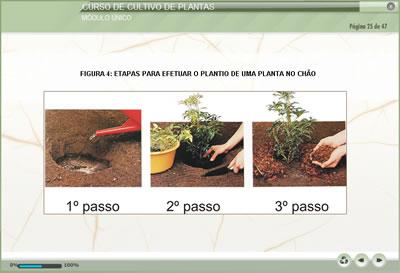 Curso Cultivo de Plantas