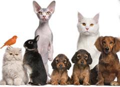 Curso Bem-estar, Proteção Animal e Legislação
