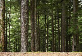 Curso Certificação Florestal