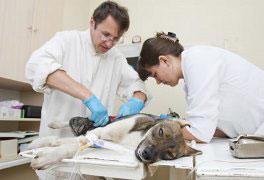 Curso Clínica Cirúrgica em Pequenos Animais