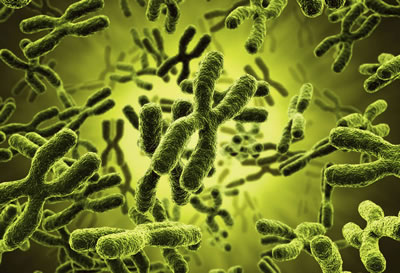Curso Citogenética