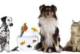 Bem-estar, Proteção Animal e Legislação