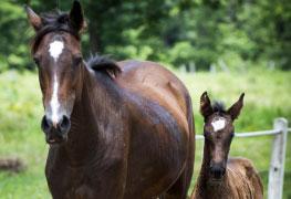 Clínica Médica e Reprodução de Equinos