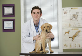 Curso Cuidados Clínicos em Pequenos Animais
