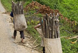 Curso Direitos Fundamentais da Criança e do Adolescente: A Exploração do Trabalho Infantil