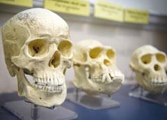 Curso Genética e Evolução das Espécies