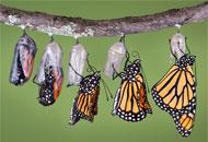 Curso Entomologia