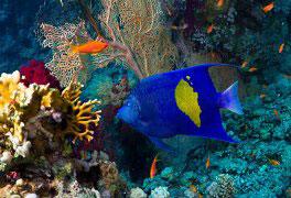 Curso de Oceanografia Geral