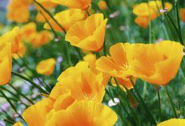 Botânica Geral e Angiospermas