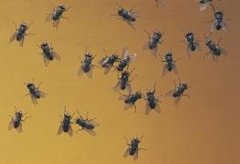 Curso Entomologia Forense