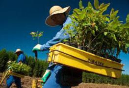 Pós-graduação em Manejo Florestal Sustentável - Especialização lato sensu
