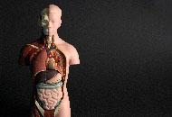 Curso Online de Biomedicina Estética