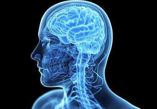 Neuropsicologia e Neurolinguística