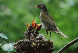 Curso Observação de Aves - Birdwatching