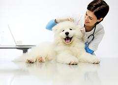 Patologia Veterinária Especial para Cães e Gatos - Completo
