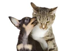 Patologia Veterinária Especial de Cães e Gatos